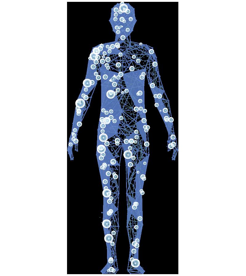 CE modelo anatomico servicios traumatologia